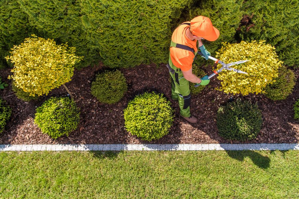 Landscaper Trimming Bushes